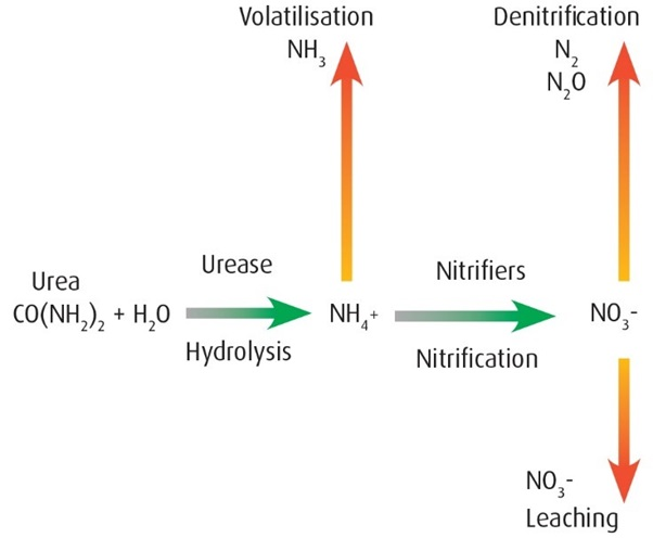 Nitrogen loss pathways