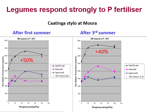 Figure 2: Response of Caatinga stylo to phosphorus fertiliser at Moura in 2013 and 2015. Source: Gavin Peck, QDAF