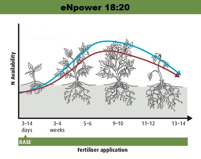 Figure 1: Using eNpower 18:20 for the basal application helps provide a more continuous supply of nitrogen to the crop and may reduce the need for top up applications.
