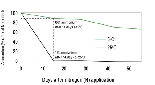Figure 2: Conversion to nitrate nitrogen may be rapid in warmer soils. Ammonium levels over time from applied urea at two soil temperatures. This experiment was conducted in a moist alkaline vertosol soil (pHw 7.8, 60% water filled pore space). Source: Chen, D, Suter, H et al (2008) Australian Journal of Soil Research, Vol 46, pp 289-301.