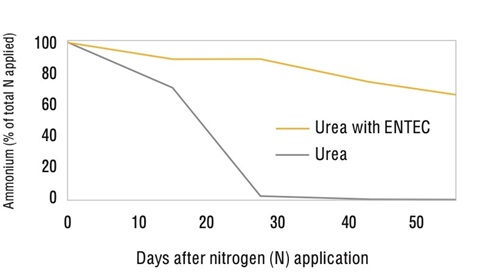 Figure 3: ENTEC stabilises nitrogen in the ammonium form. This experiment was conducted with urea in a moist alkaline vertosol soil at 15oC (pHw 7.8, 60% water filled pore space). Source: Chen, D, Suter, H et al (2008) Australian Journal of Soil Research, Vol 46, pp 289-301.
